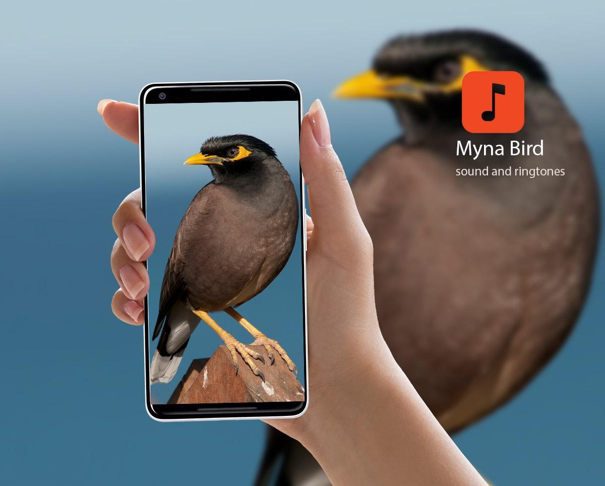 Myna Bird Calls 1.0.2 Screenshot 1
