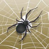 Spider Solitaire app icon